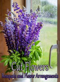 Cut Flowers – Bouquets and Flower Arrangements