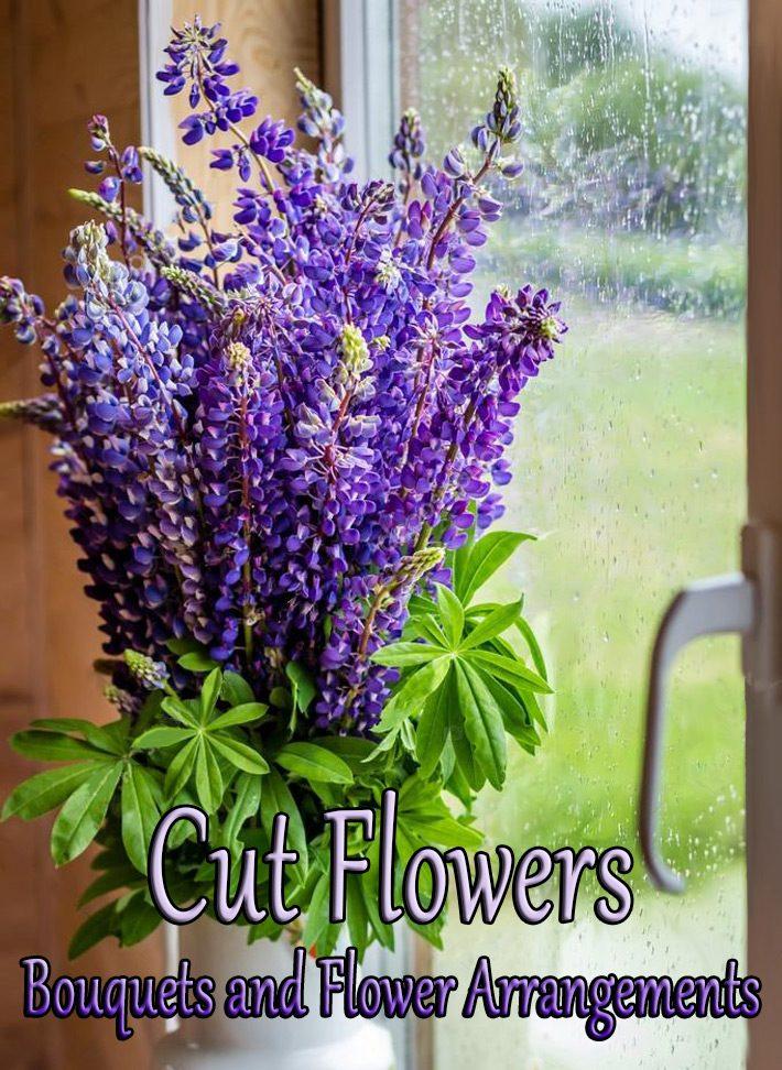 Cut Flowers – Bouquets and Flower Arrangements