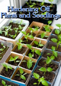 Hardening Off Plants and Seedlings