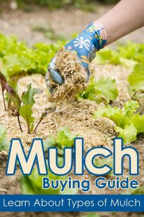 Mulch Buying Guide – Learn About Types of Mulch