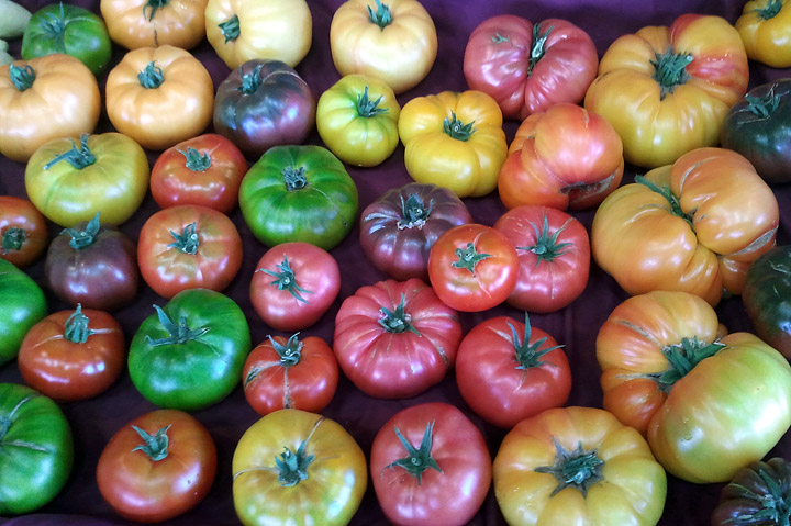 Tomatoes Nutritional Value – Which Type to Plant?
