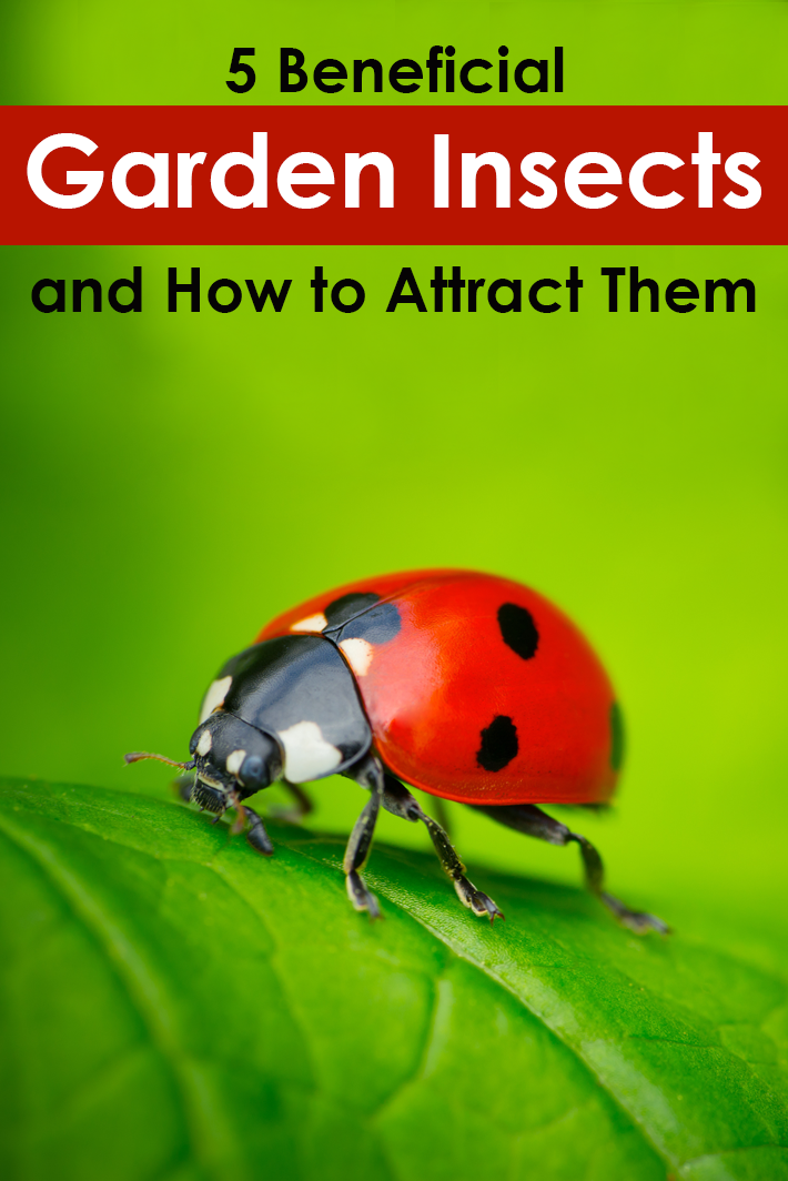 5 Beneficial Garden Insects and How to Attract Them