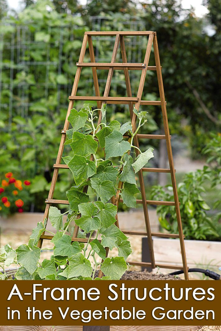 A Frame Structures in the Vegetable Garden