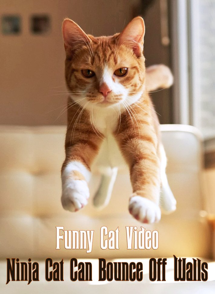 Funny Cat Video – Ninja Cat Can Bounce Off Walls