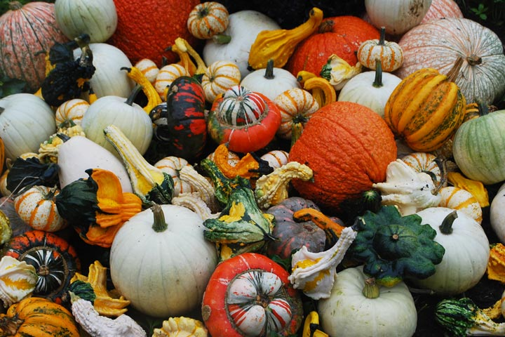 How to Dry or Cure Gourds