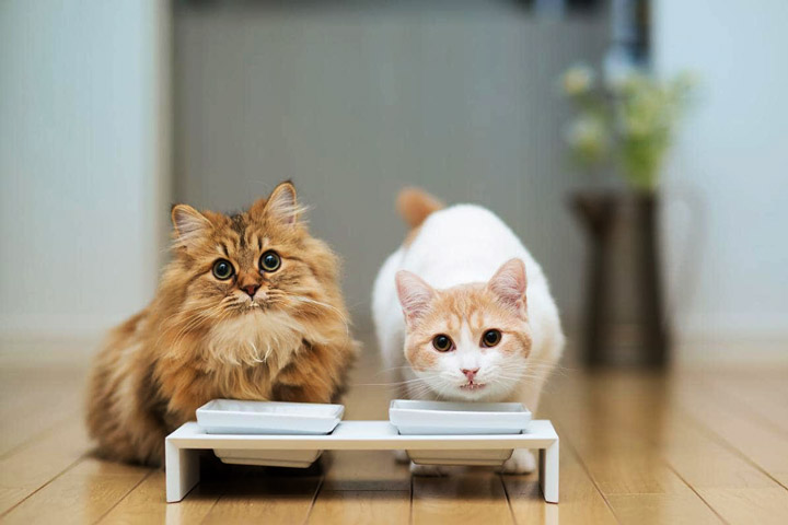 Simple Tips for Introducing Two Cats