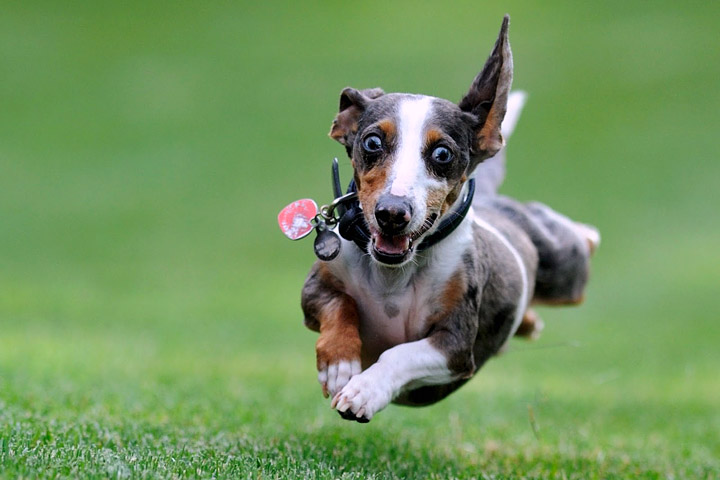 Stimulate Your Dog to Avoid Dog Hyperactivity