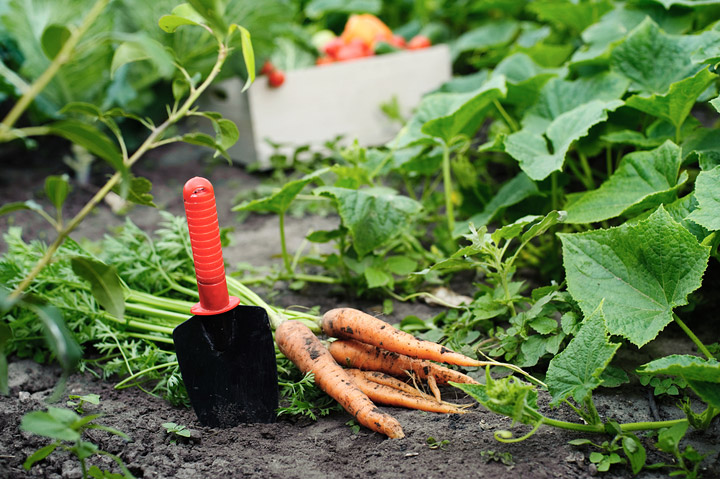 Fall Vegetable Garden - Vegetables to Grow During Fall