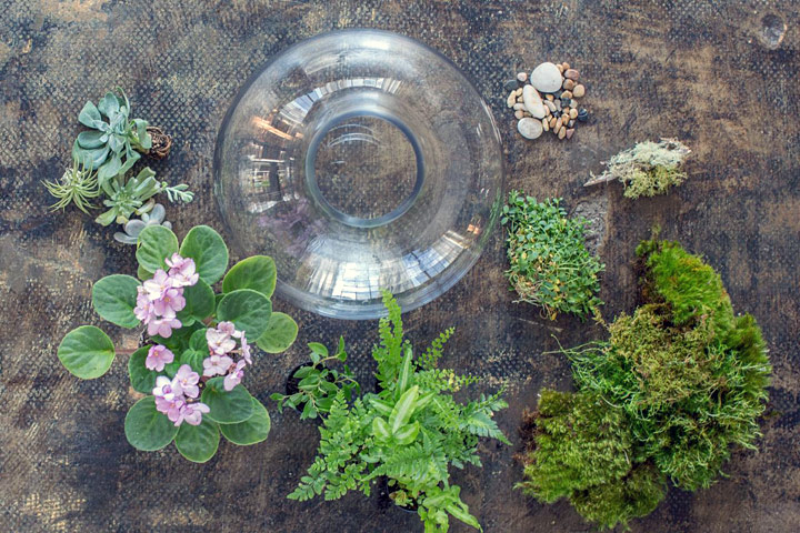 Helpful Guide to Choosing Terrarium Plants