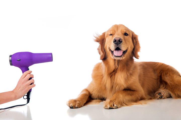 Dog Grooming – How to Groom Your Dog at Home