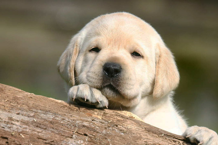 Dog Biting - Teaching Your Puppy to Not Bite