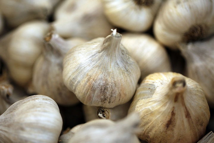 Garlic Varieties – What Type to Plant and How