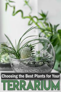 Choosing the Best Plants for Your Terrarium
