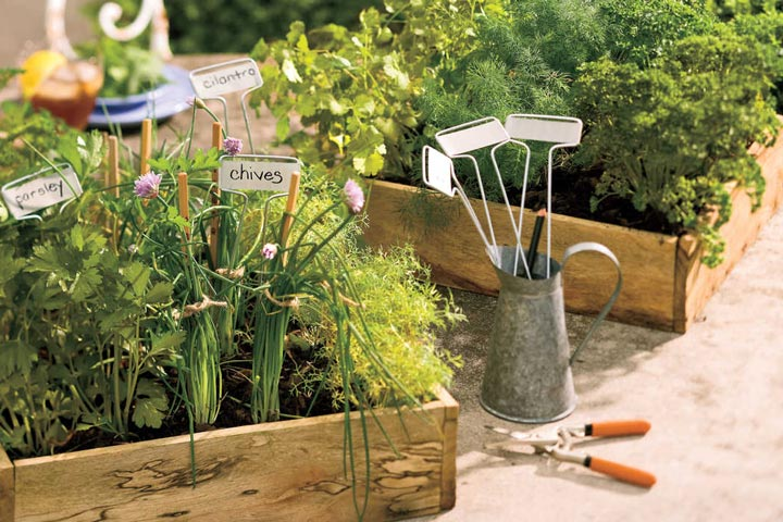 Cool Season - Herbs Growing Tips