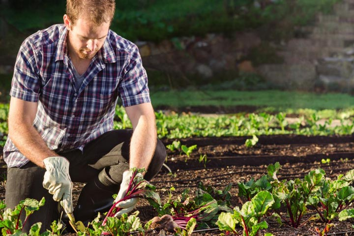 What to do in the Kitchen Garden in October