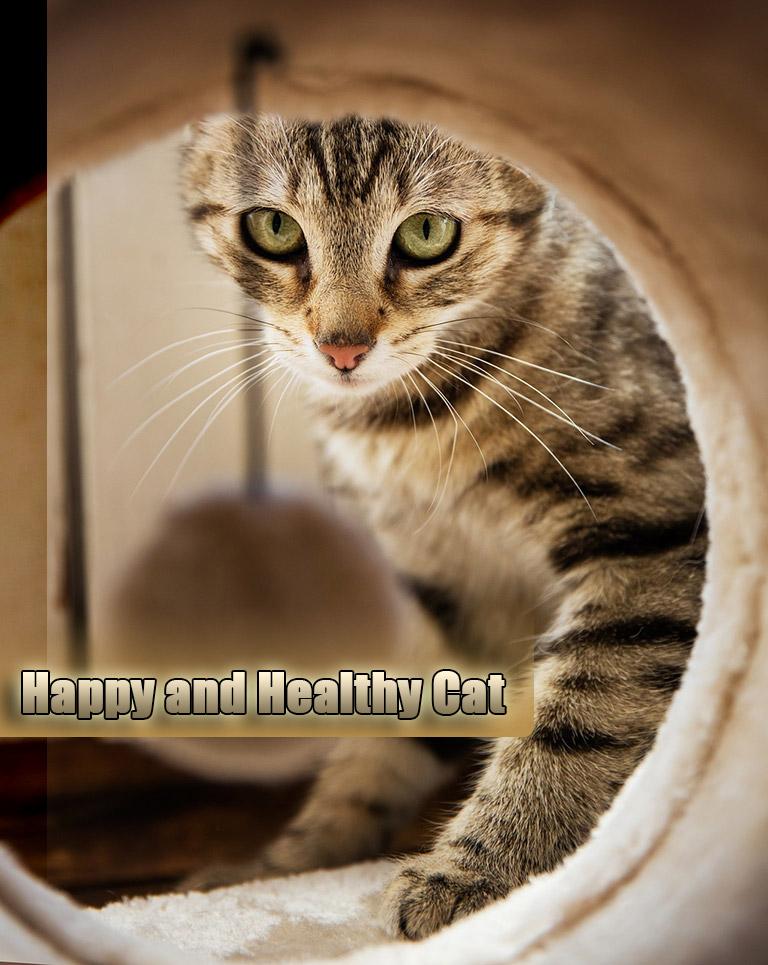 Help Your Cat Live Longer Healthier Life