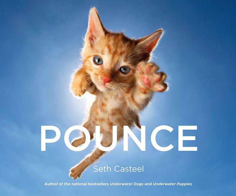 POUNCE – Photo Book of Jumping Kittens