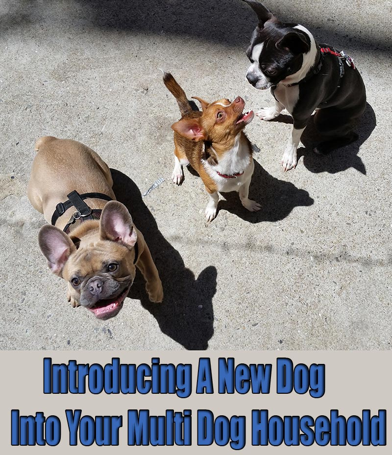 Introducing A New Dog Into Your Multi Dog Household