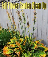 Fall Flower Garden Clean Up