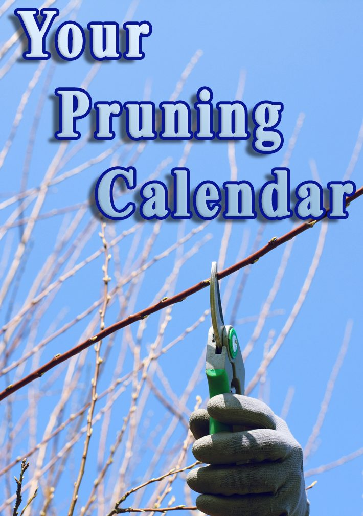 Your Pruning Calendar