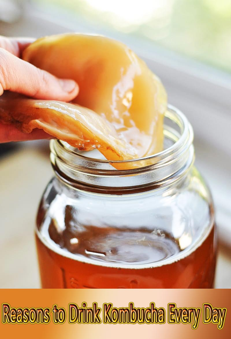 Reasons to Drink Kombucha Every Day