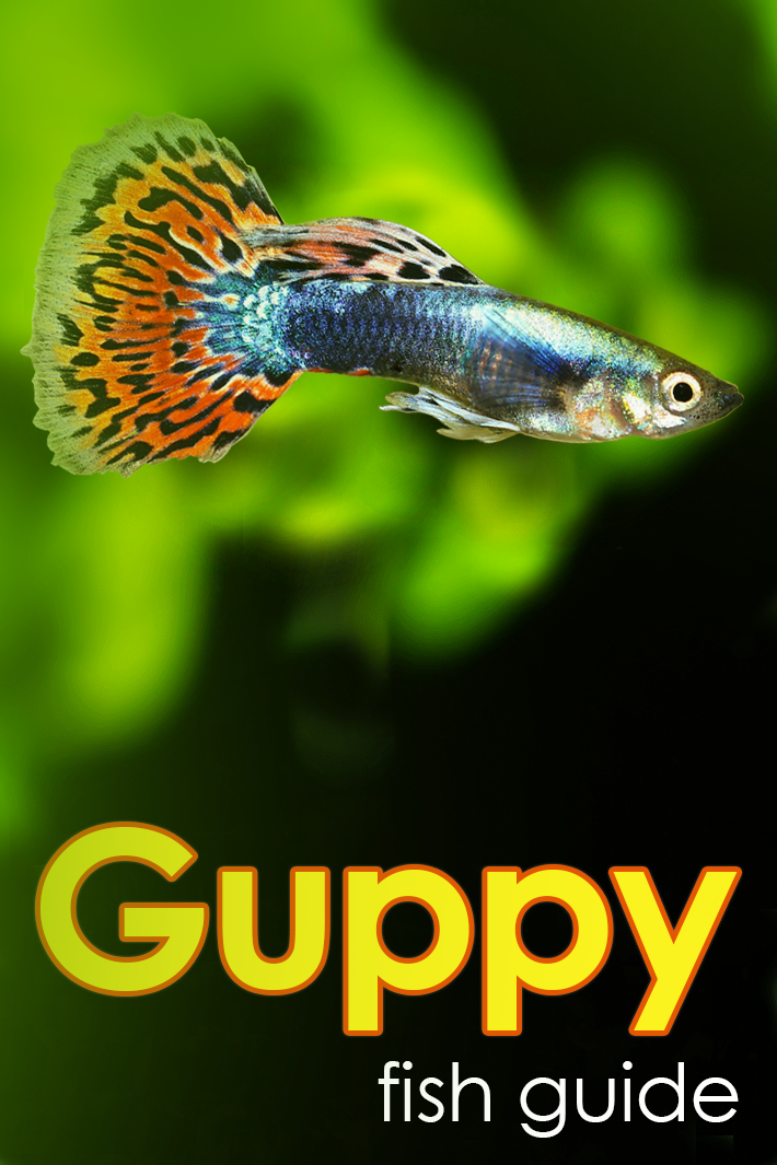 Guppy – Millions Fish