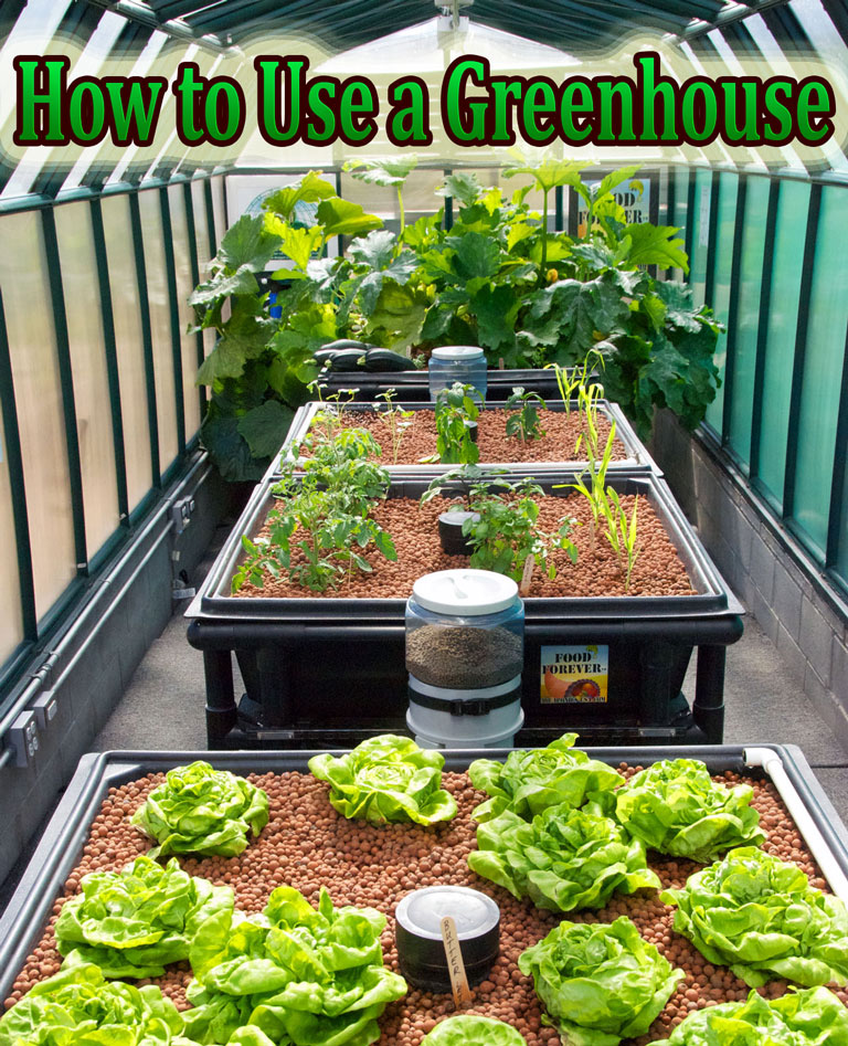 How to Use a Greenhouse