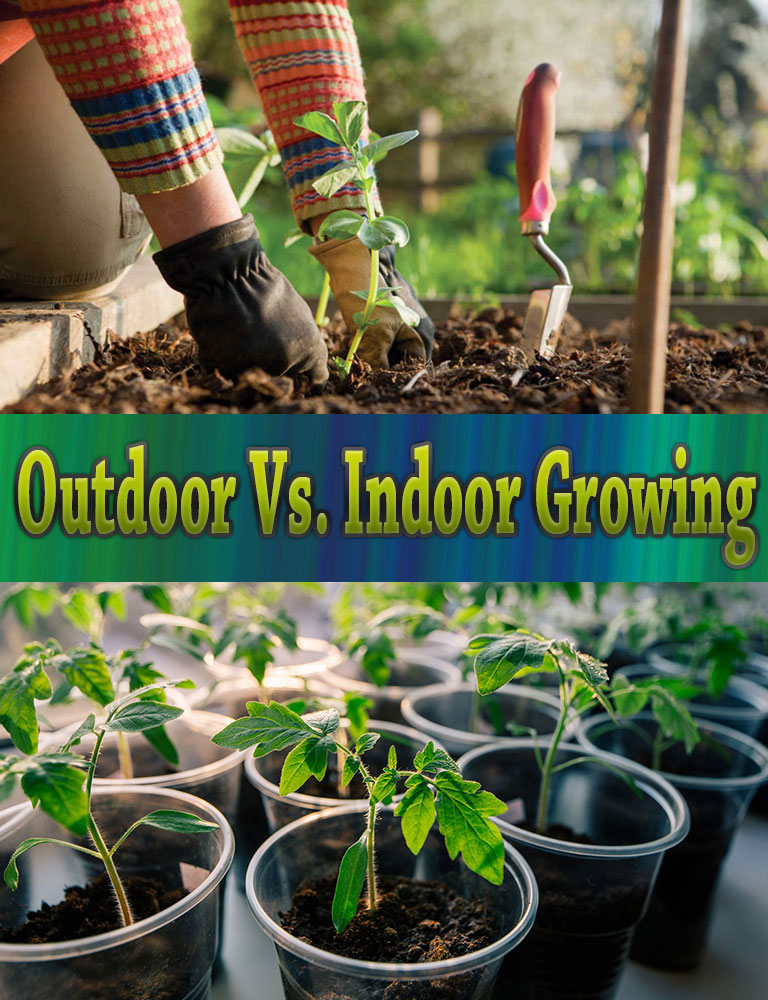 Outdoor Vs. Indoor Growing