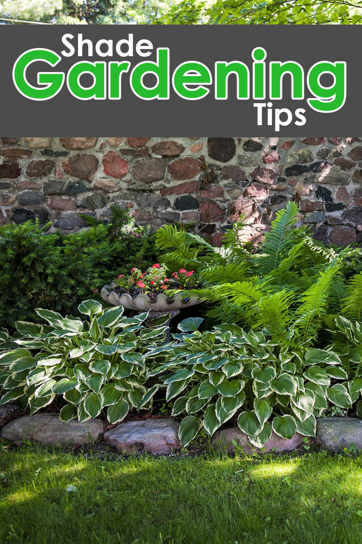Shade Gardening Tips - Quiet Corner