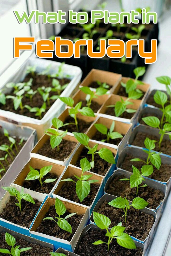 February Gardening Tips – What to Plant in February