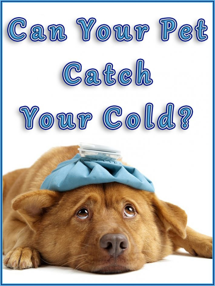 Can Your Pet Catch Your Cold?