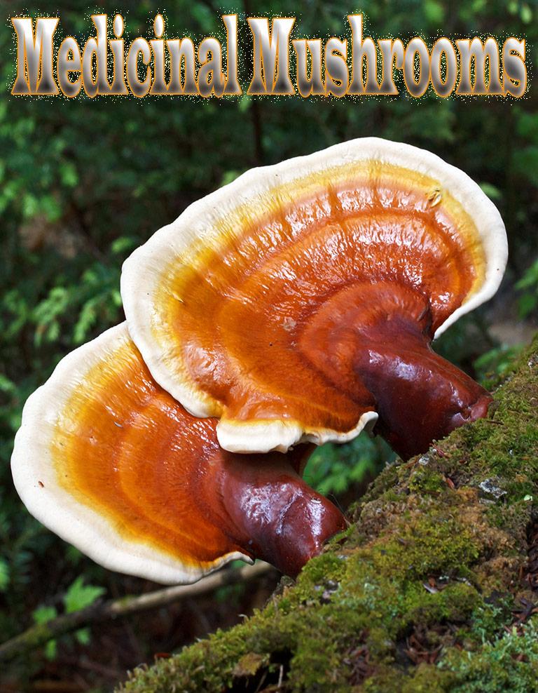 5 Medicinal Mushrooms With Powerful Health Benefits