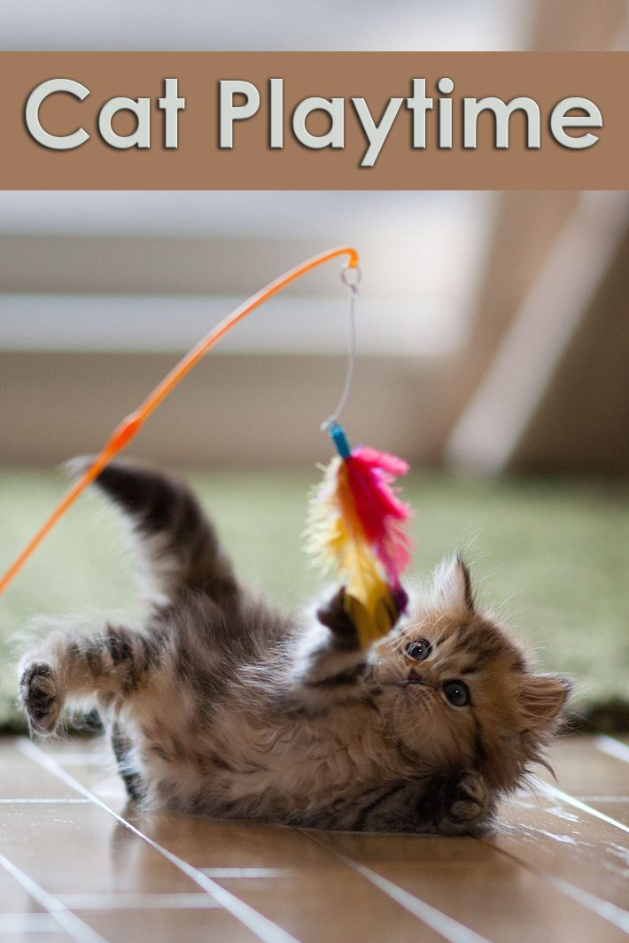 Playtime With Your Cat