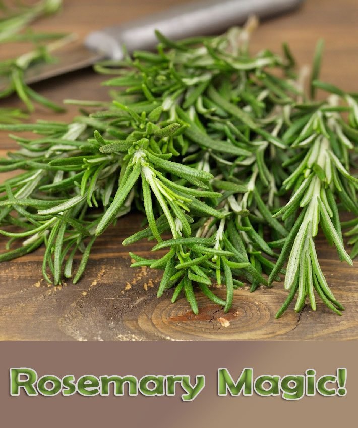 Rosemary Magic! Five Easy Ways that Rosemary Can Improve Your Well-being