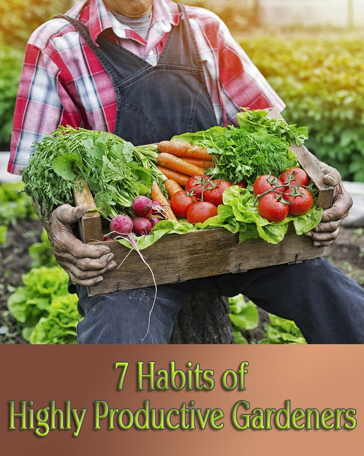 Gardening Tips – 7 Habits of Highly Productive Gardeners