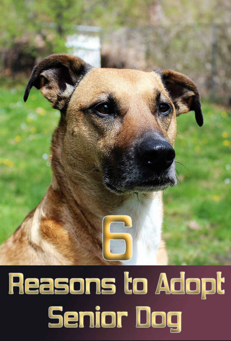 6 Reasons to Adopt a Senior Dog