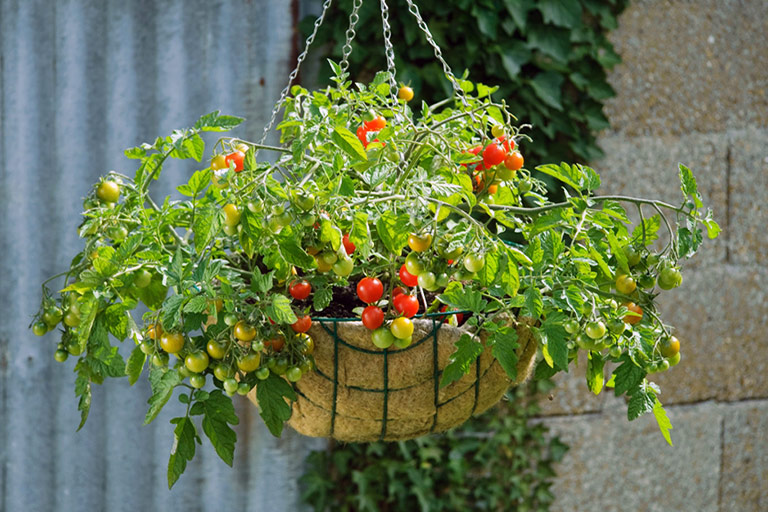 Hanging Garden Fruits And Vegetables In Hanging Baskets