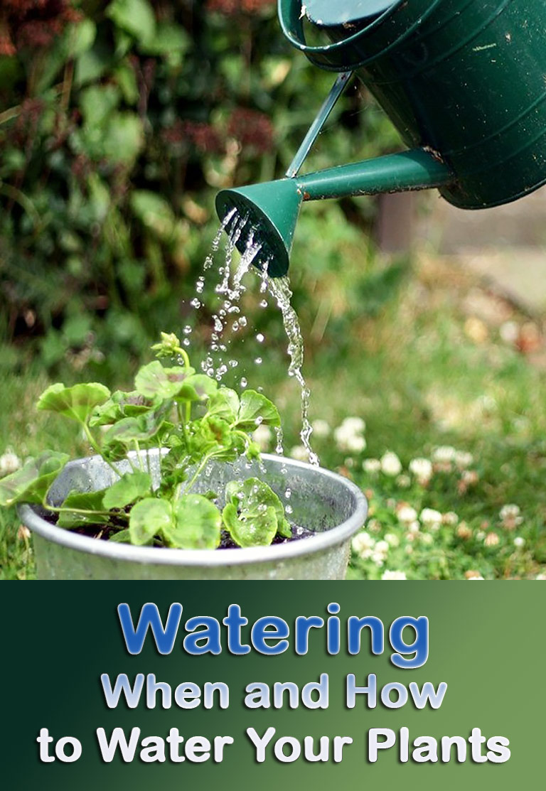 Watering – When and How to Water Your Plants