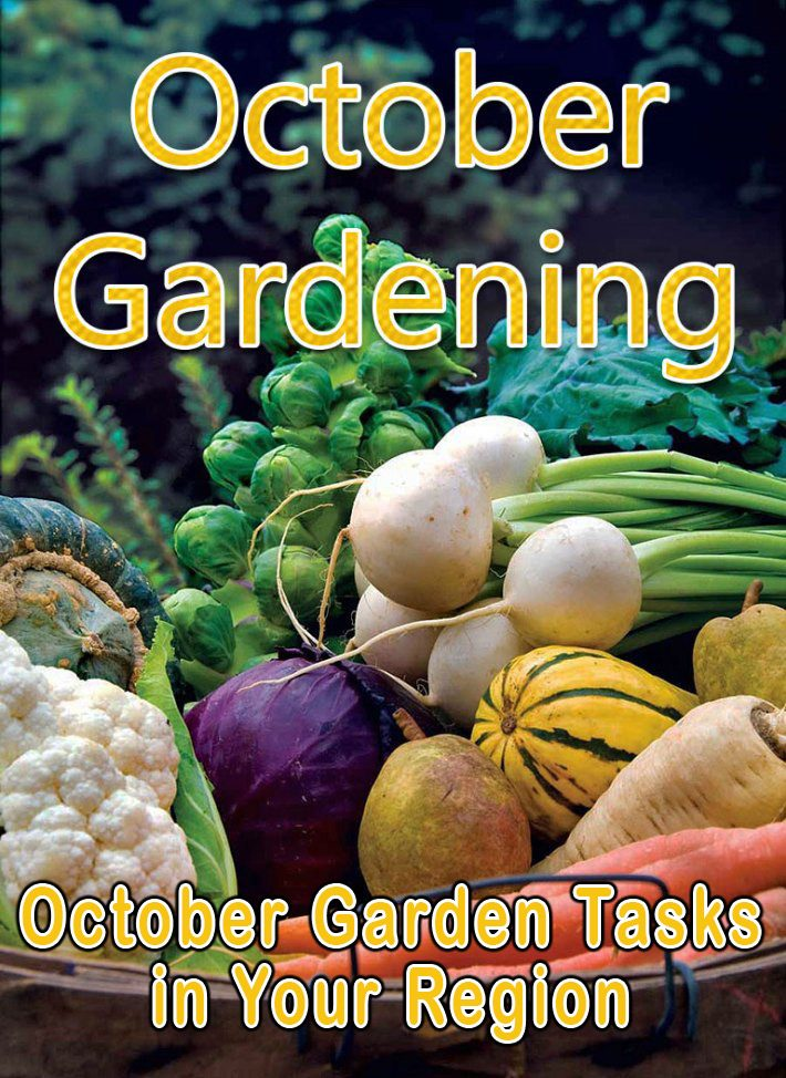 October Gardening: October Garden Tasks in Your Region