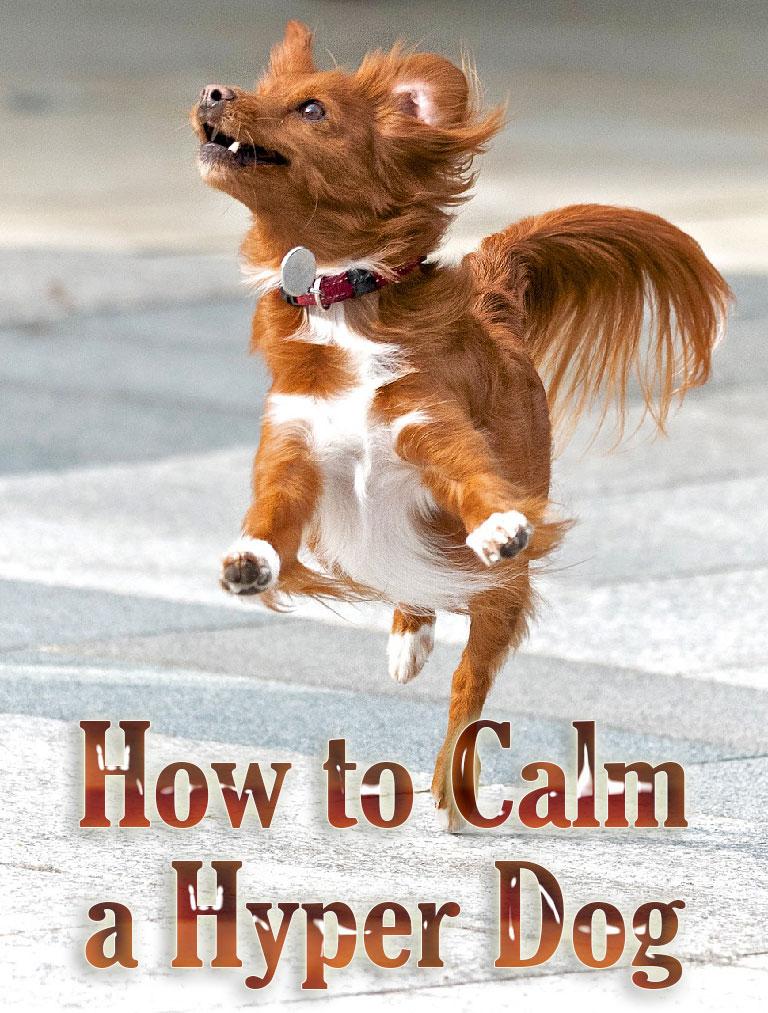 How to Calm a Hyper Dog