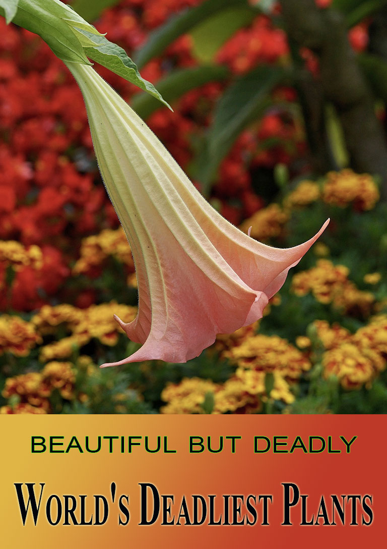 11 of the World's Deadliest Plants