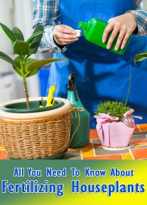 About Fertilizing House Plants