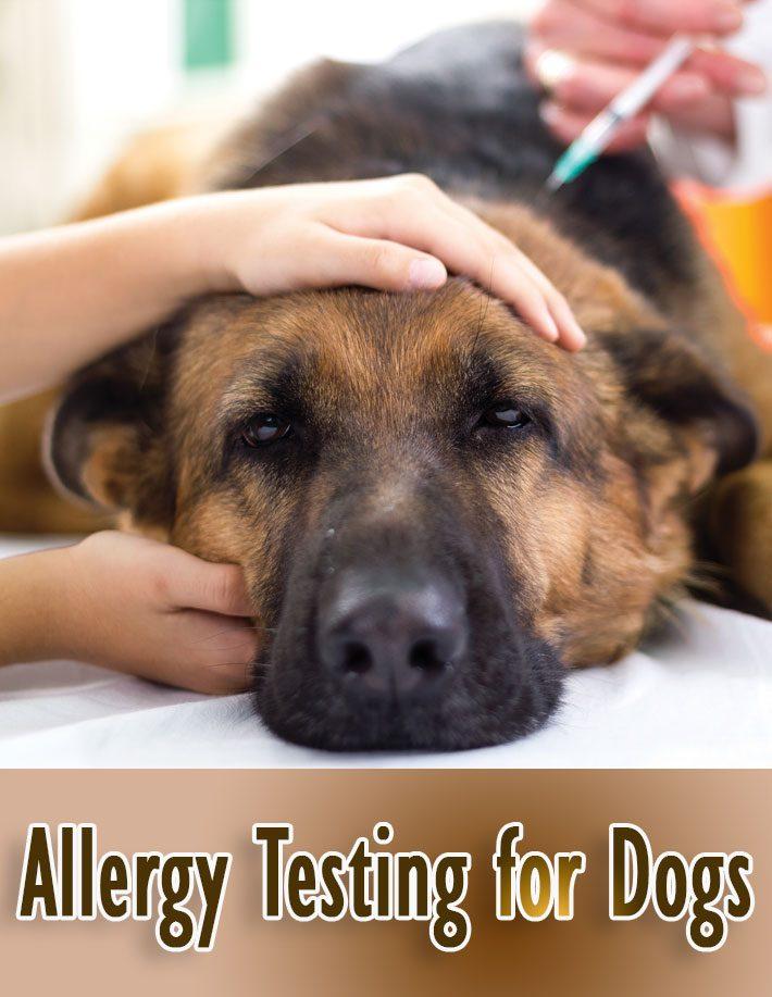 Allergy Testing for Dogs