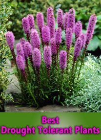 Best Drought Tolerant Plants