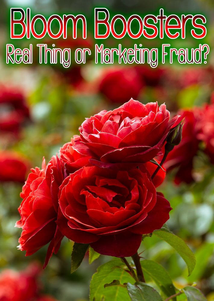 Bloom Boosters – Real Thing or Marketing Fraud?