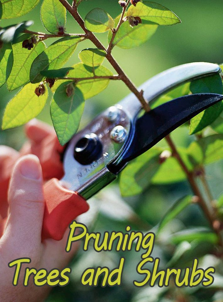 Basic Steps for Pruning Trees and Shrubs