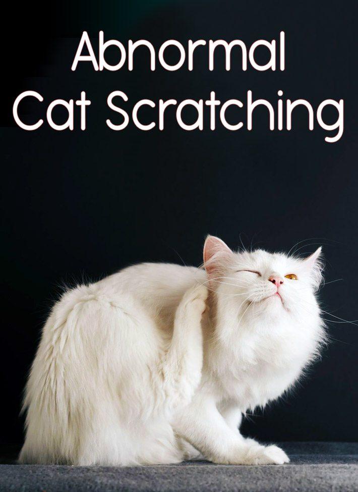 Abnormal Cat Scratching
