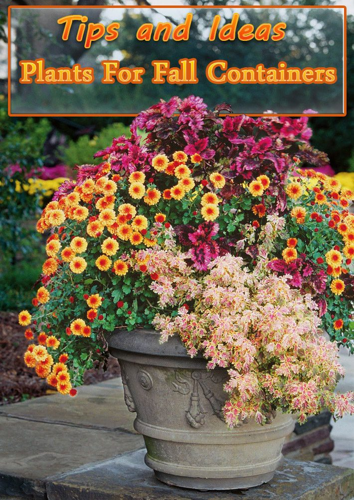 Plants For Fall Containers – Tips and Ideas