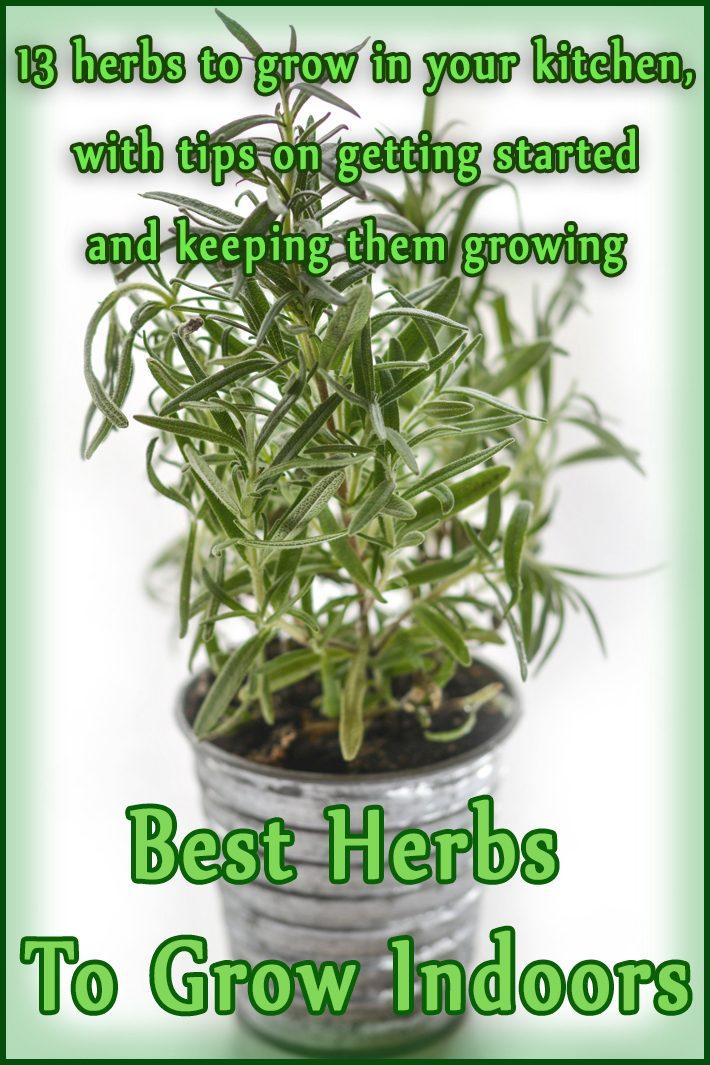 Quiet corner best herbs to grow indoors quiet corner - Best herbs to grow indoors ...