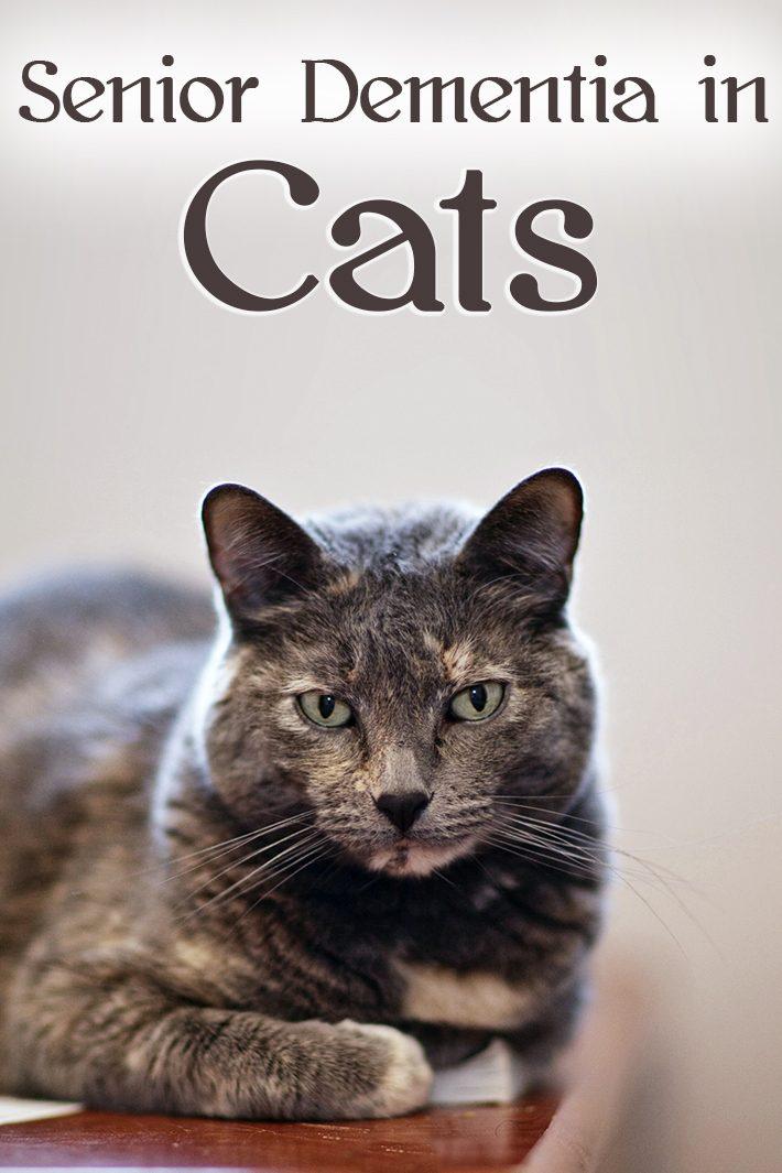 Senior Dementia in Cats